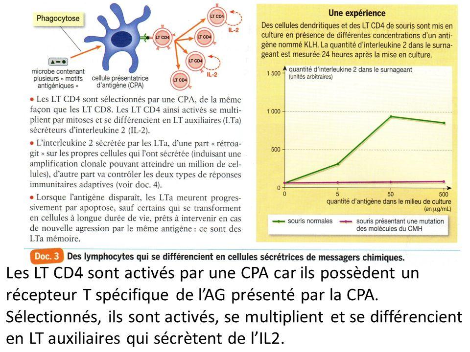 Les LT CD4 sont activés par une CPA car ils possèdent un récepteur T spécifique de lAG présenté par la CPA. Sélectionnés, ils sont activés, se multipl