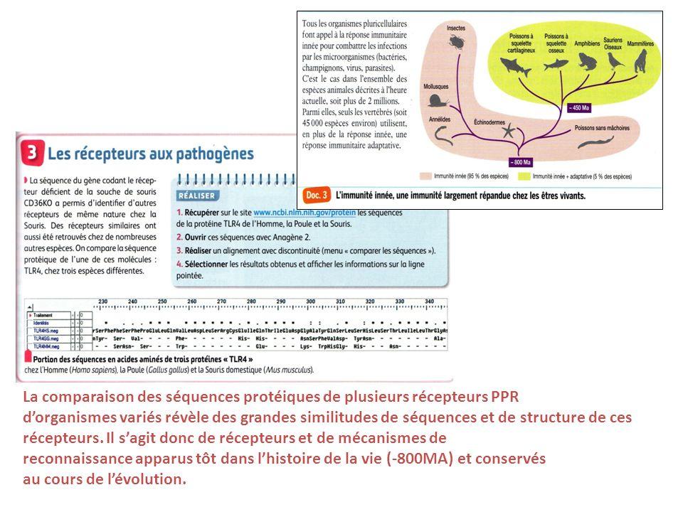 La comparaison des séquences protéiques de plusieurs récepteurs PPR dorganismes variés révèle des grandes similitudes de séquences et de structure de