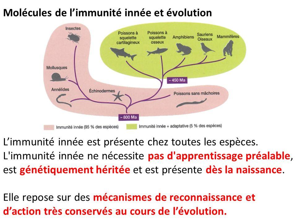 Molécules de limmunité innée et évolution Limmunité innée est présente chez toutes les espèces. L'immunité innée ne nécessite pas d'apprentissage préa