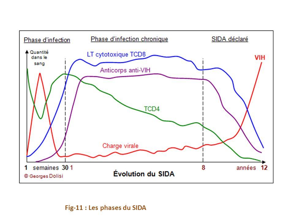 Fig-11 : Les phases du SIDA
