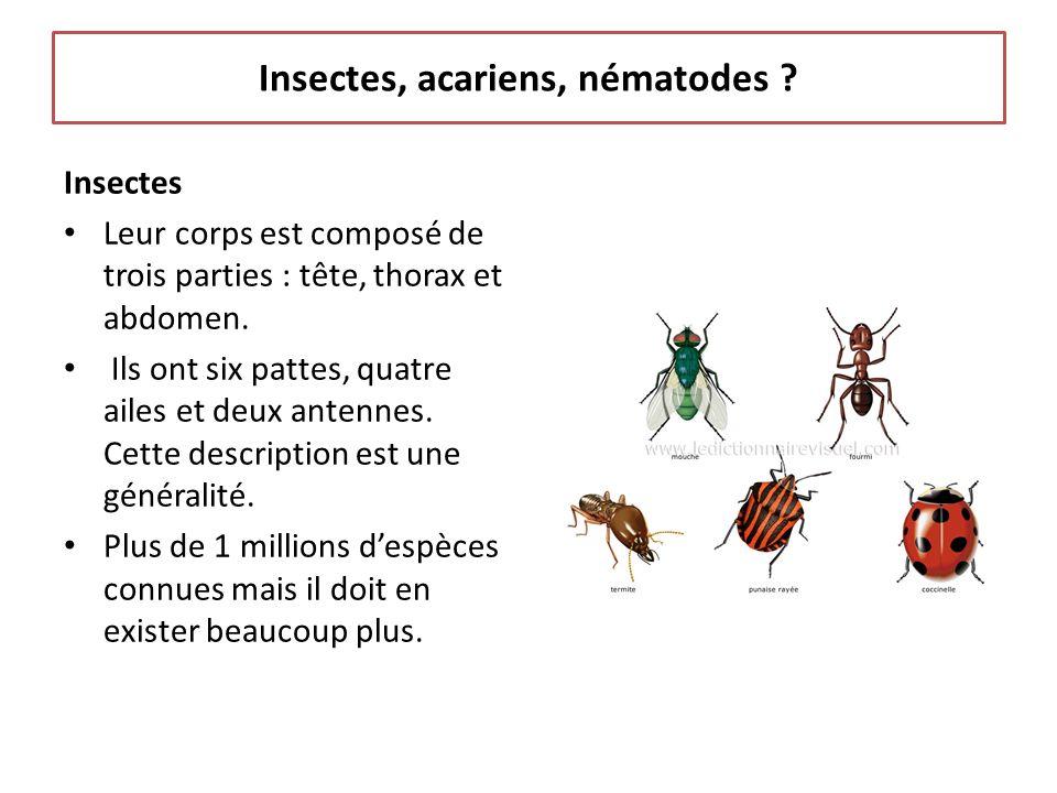 Insectes, acariens, nématodes ? Insectes Leur corps est composé de trois parties : tête, thorax et abdomen. Ils ont six pattes, quatre ailes et deux a
