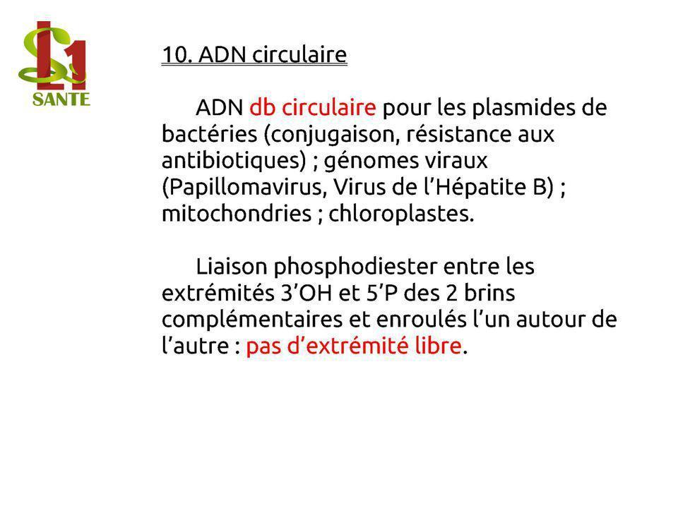 10. ADN circulaire