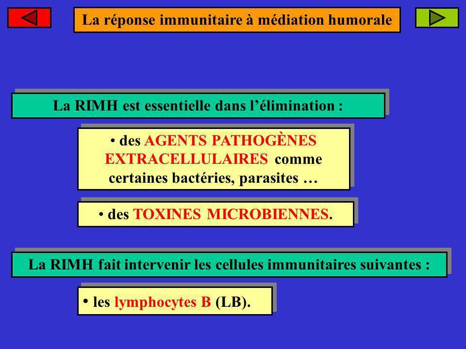 La réponse immunitaire à médiation humorale La RIMH est essentielle dans lélimination : La RIMH est essentielle dans lélimination : des AGENTS PATHOGÈ