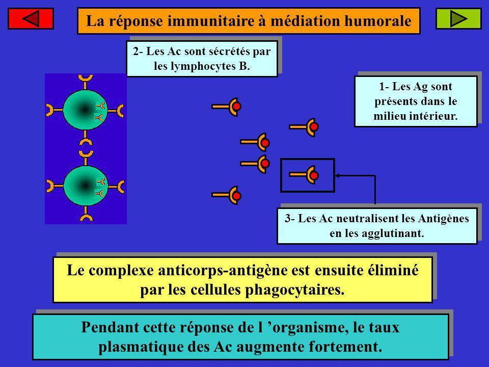 2- Les Ac sont sécrétés par les lymphocytes B. 2- Les Ac sont sécrétés par les lymphocytes B. 1- Les Ag sont présents dans le milieu intérieur. 1- Les
