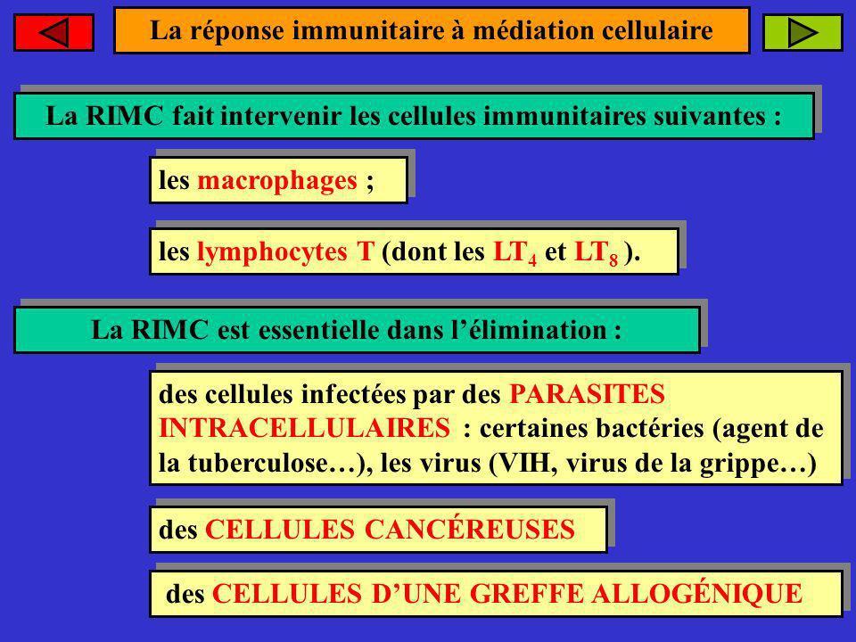 La réponse immunitaire à médiation cellulaire La RIMC fait intervenir les cellules immunitaires suivantes : La RIMC fait intervenir les cellules immun