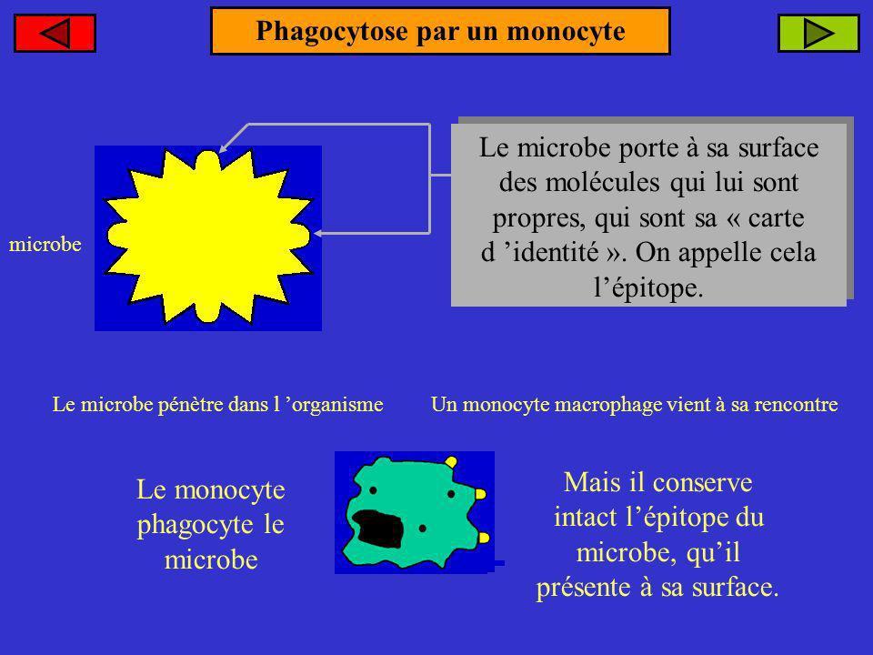 Phagocytose par un monocyte Le microbe pénètre dans l organisme microbe Le microbe porte à sa surface des molécules qui lui sont propres, qui sont sa