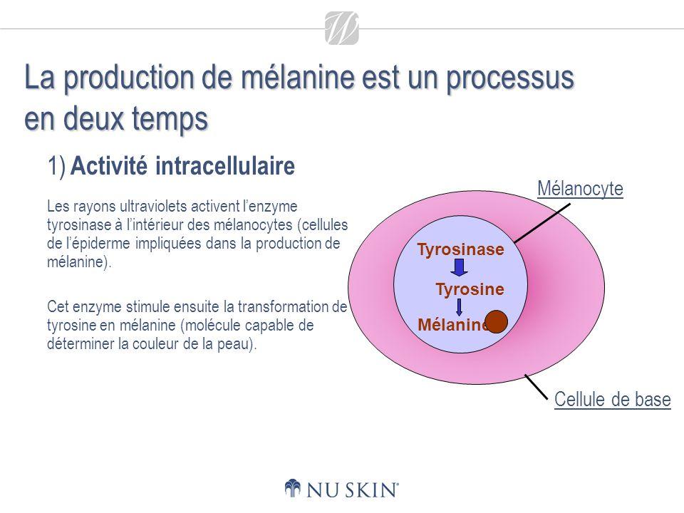 1) Activité intracellulaire Les rayons ultraviolets activent lenzyme tyrosinase à lintérieur des mélanocytes (cellules de lépiderme impliquées dans la production de mélanine).
