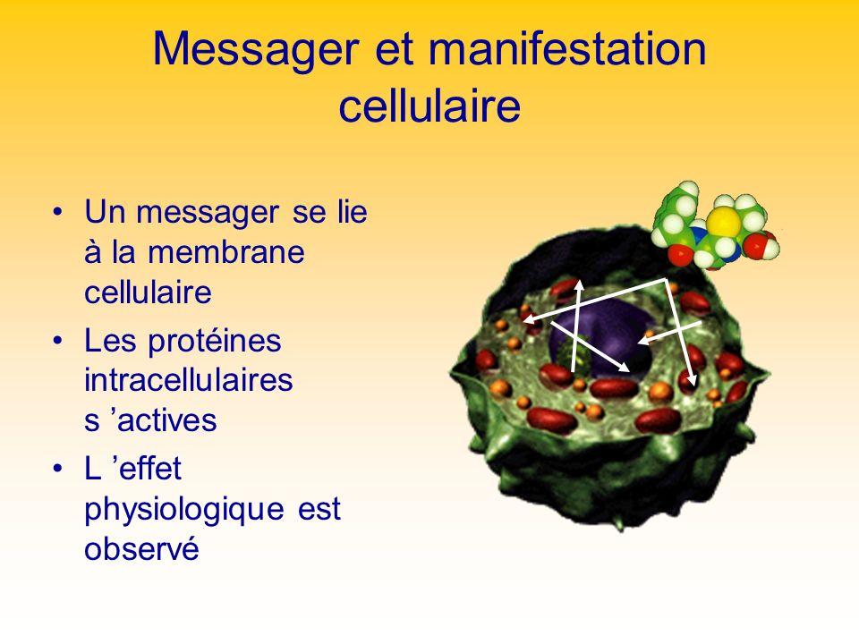 Messager et manifestation cellulaire Un messager se lie à la membrane cellulaire Les protéines intracellulaires s actives L effet physiologique est ob