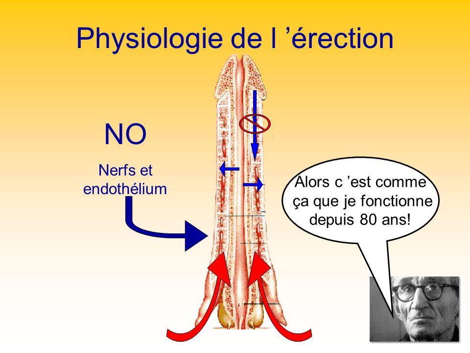 Physiologie de l érection Alors c est comme ça que je fonctionne depuis 80 ans! NO Nerfs et endothélium