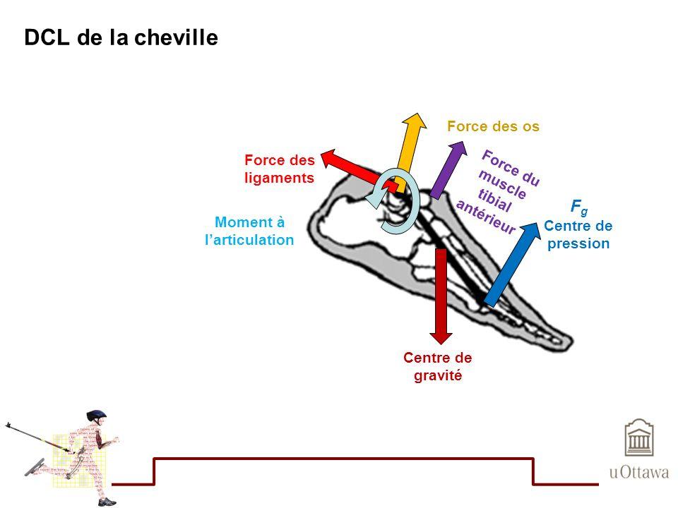 DCL de la cheville Centre de gravité F g Centre de pression Force du muscle tibial antérieur Force des os Force des ligaments Moment à larticulation