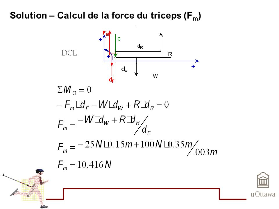 Solution – Calcul de la force du triceps (F m ) R w