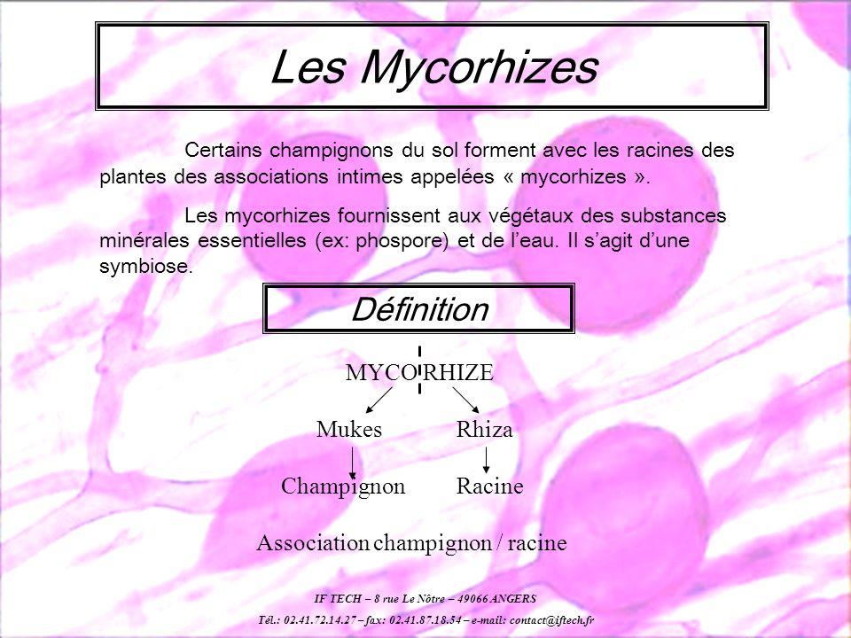 Les Mycorhizes Certains champignons du sol forment avec les racines des plantes des associations intimes appelées « mycorhizes ».