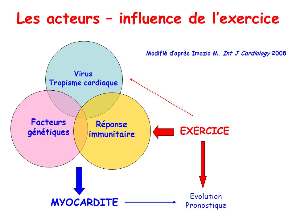 Virus Tropisme cardiaque Facteurs génétiques Réponse immunitaire EXERCICE Modifié daprès Imazio M. Int J Cardiology 2008 Les acteurs – influence de le