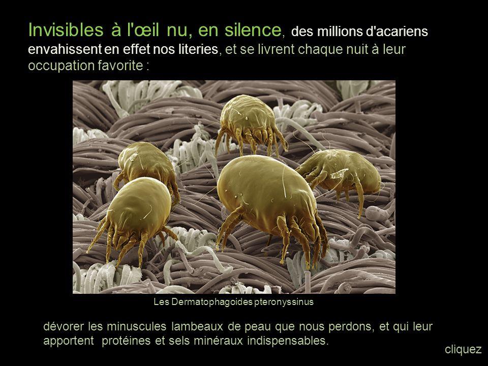 Des créatures venues de la nuit des temps, inchangées depuis quatre cents millions d'années. cliquez Avec les acariens, nous pénétrons dans l'univers
