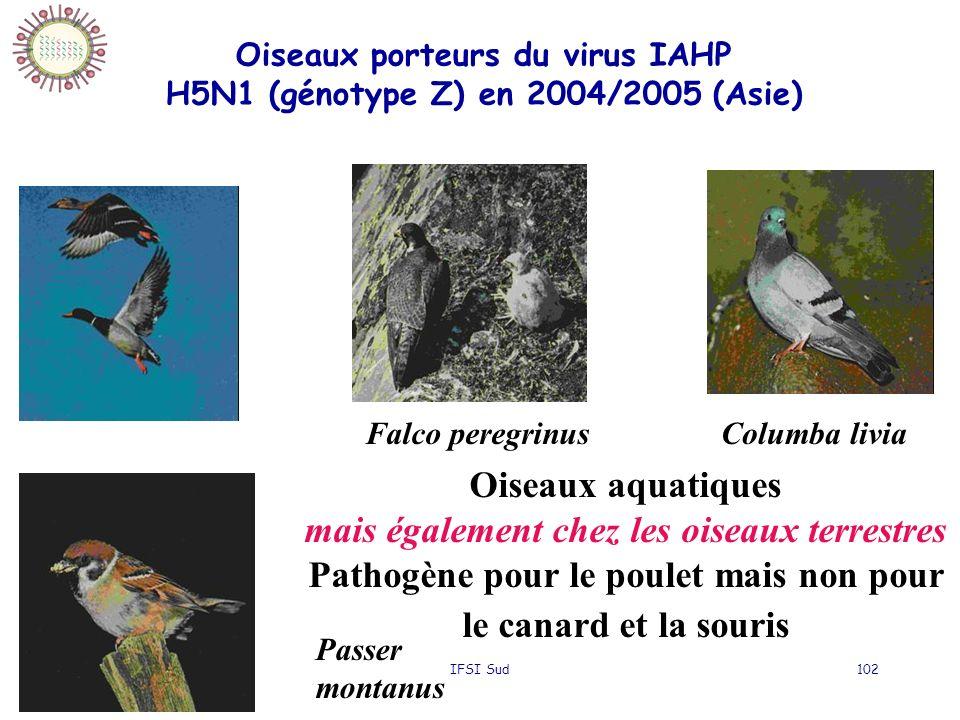 20/10/2006IFSI Sud102 Oiseaux porteurs du virus IAHP H5N1 (génotype Z) en 2004/2005 (Asie) Falco peregrinusColumba livia Passer montanus Oiseaux aquatiques mais également chez les oiseaux terrestres Pathogène pour le poulet mais non pour le canard et la souris