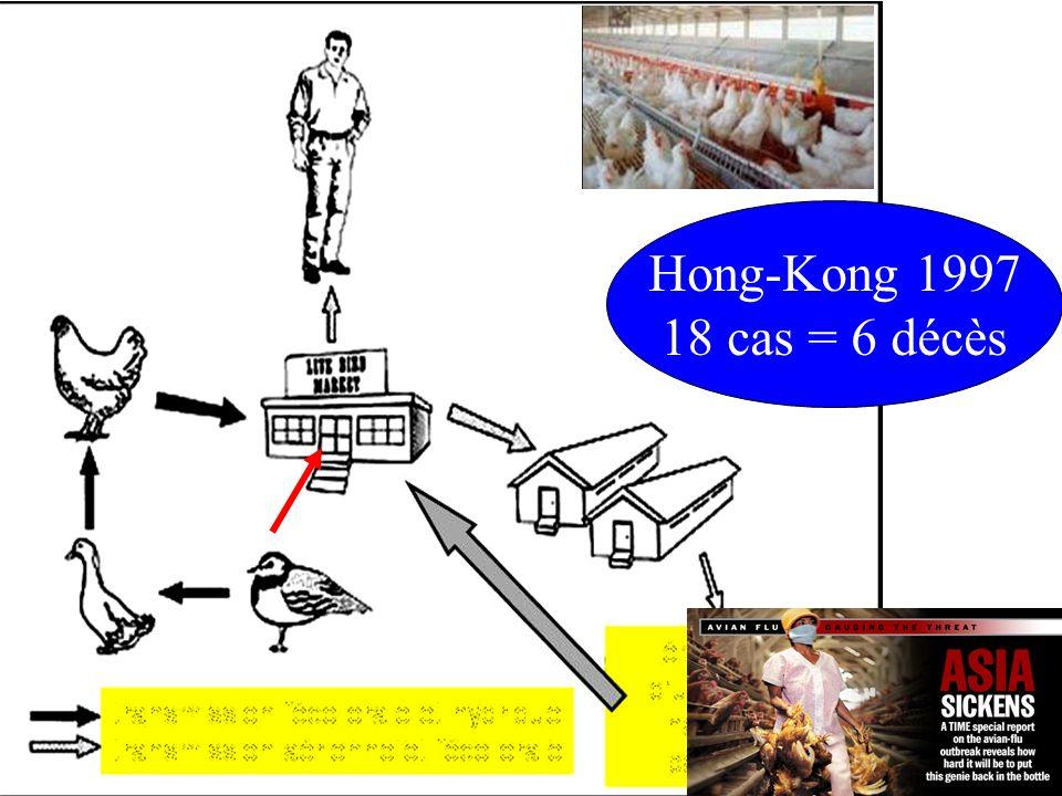 20/10/2006IFSI Sud106 Grippe aviaire, 2005 Hong-Kong 1997 18 cas = 6 décès