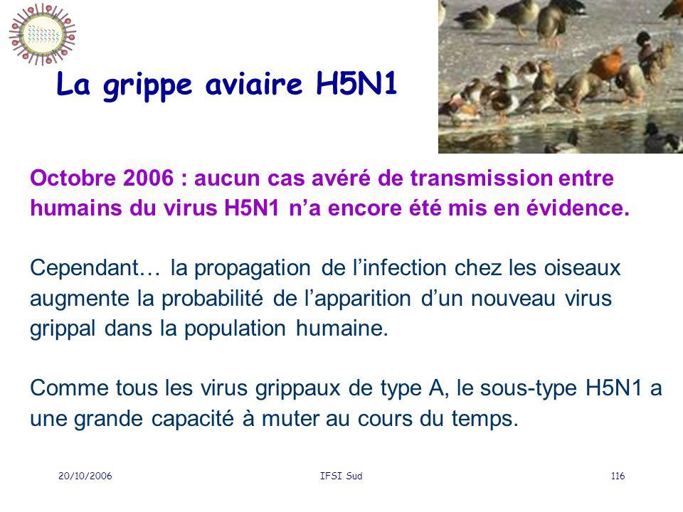 20/10/2006IFSI Sud116 La grippe aviaire H5N1 Octobre 2006 : aucun cas avéré de transmission entre humains du virus H5N1 na encore été mis en évidence.