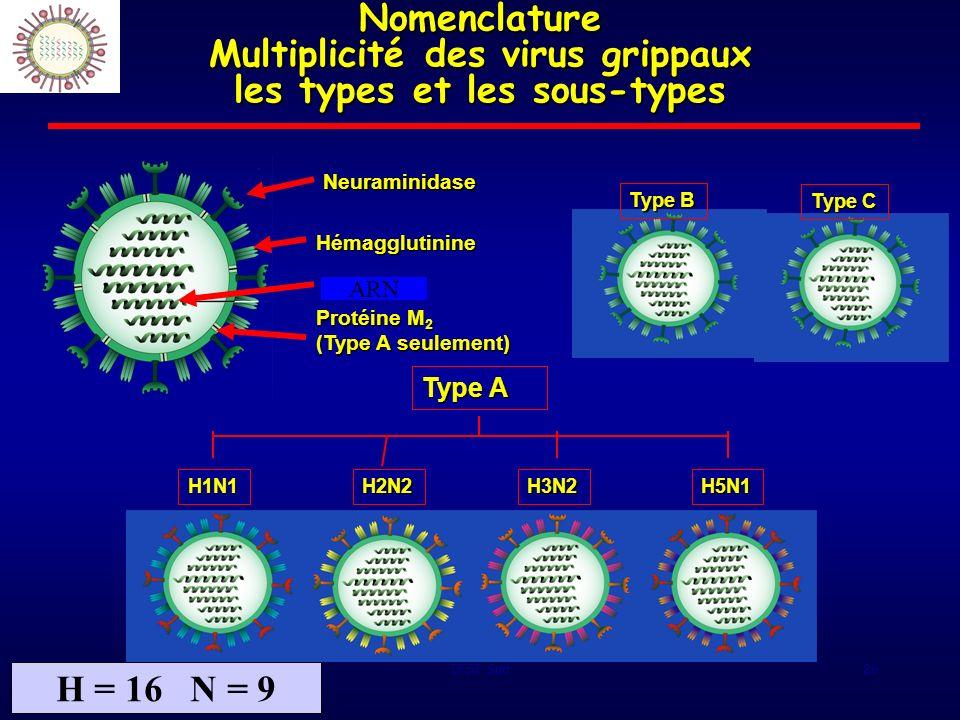 20/10/2006IFSI Sud26 Nomenclature Multiplicité des virus grippaux les types et les sous-types Type B H1N1H2N2H3N2H5N1 Type A Type C Neuraminidase Hémagglutinine Protéine M 2 (Type A seulement) ARN H = 16 N = 9