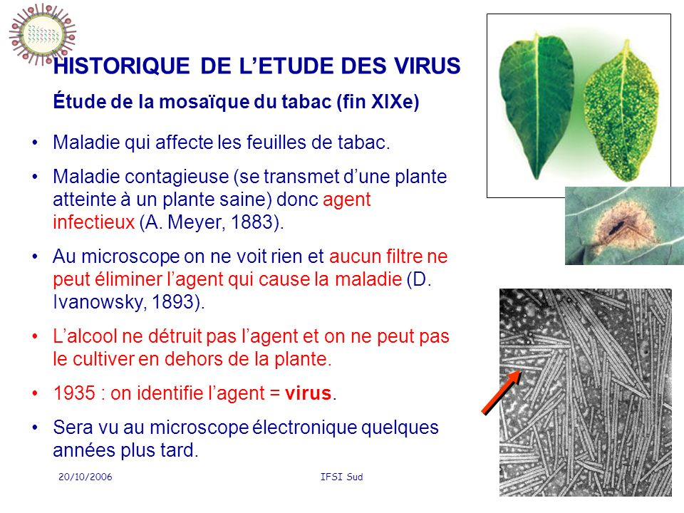 20/10/2006IFSI Sud4 HISTORIQUE DE LETUDE DES VIRUS Étude de la mosaïque du tabac (fin XIXe) Maladie qui affecte les feuilles de tabac. Maladie contagi