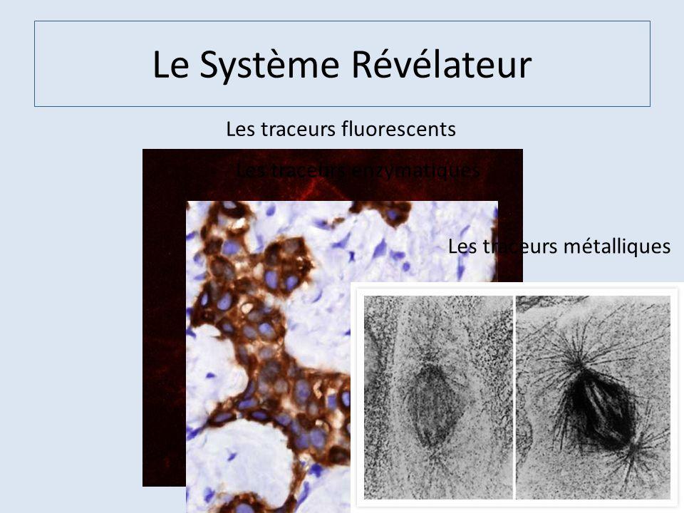 Le Système Révélateur Les traceurs fluorescents Les traceurs enzymatiques Les traceurs métalliques