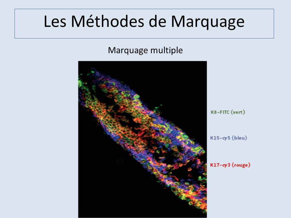 Les Méthodes de Marquage Marquage multiple