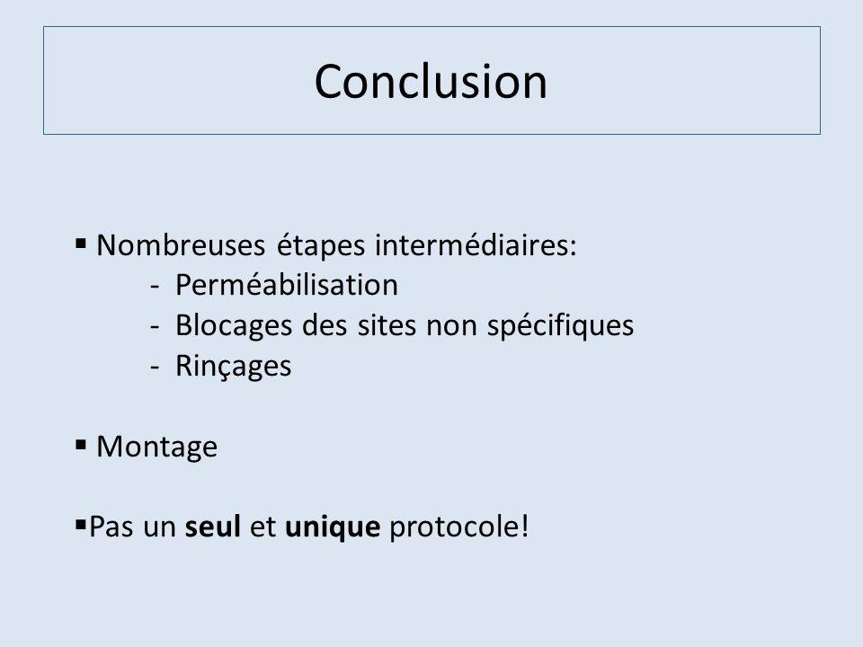 Conclusion Nombreuses étapes intermédiaires: - Perméabilisation - Blocages des sites non spécifiques - Rinçages Montage Pas un seul et unique protocol