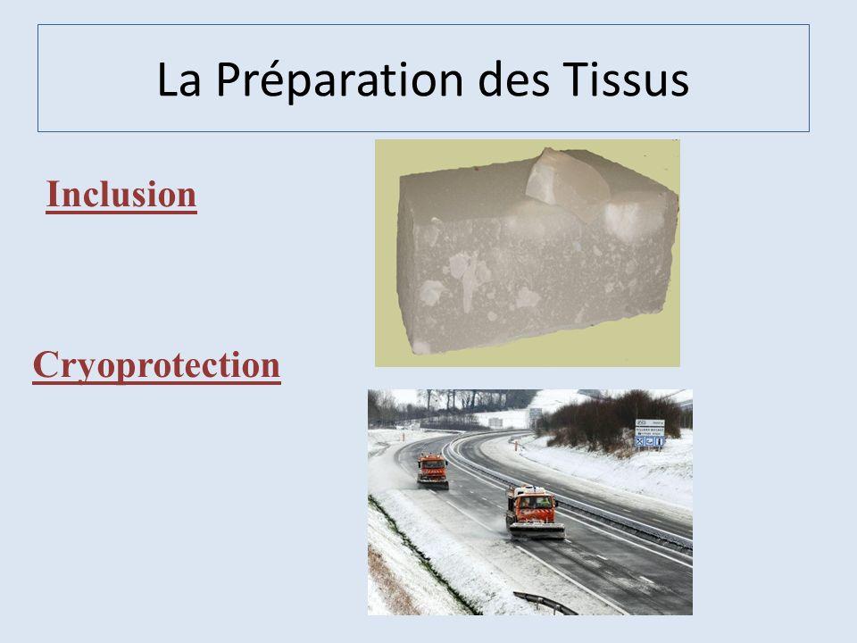 Inclusion Cryoprotection La Préparation des Tissus