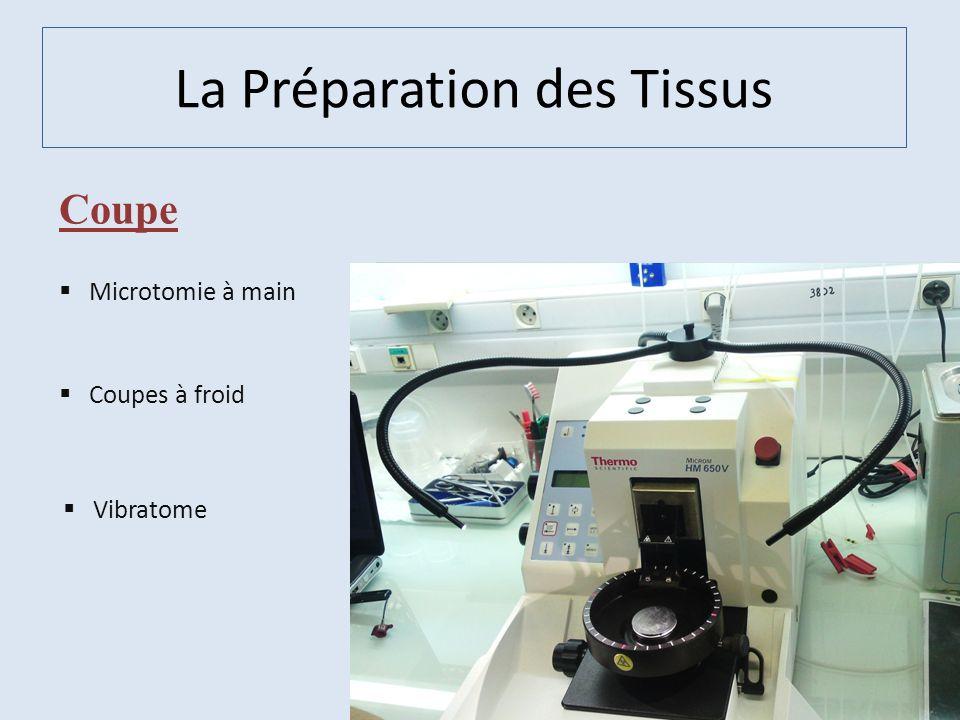 Coupe Coupes à froid Vibratome Microtomie à main La Préparation des Tissus