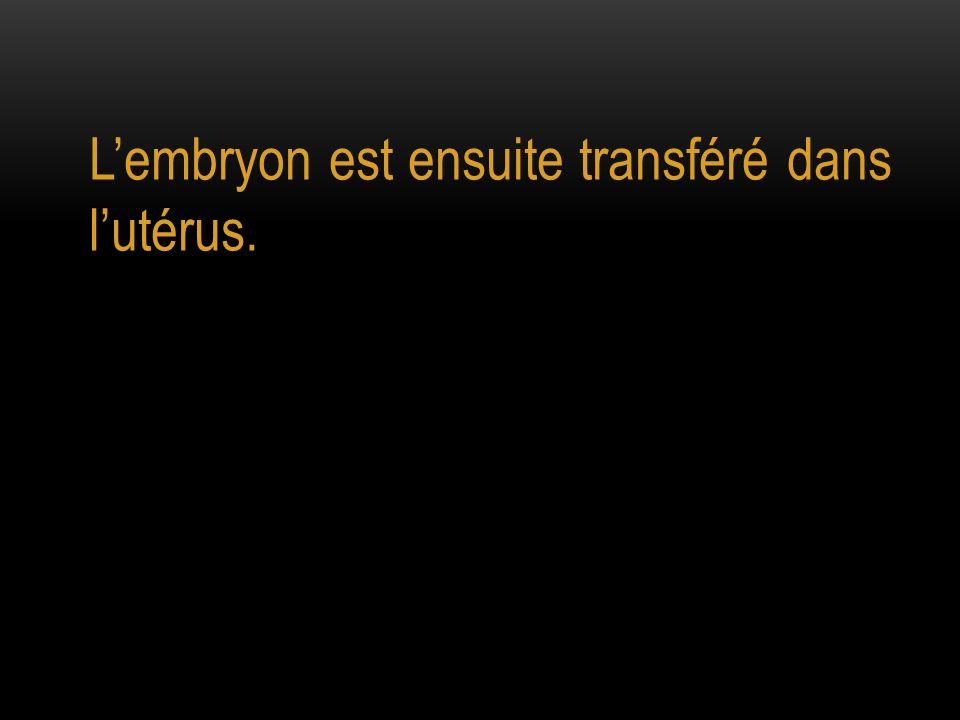 Lembryon est ensuite transféré dans lutérus.