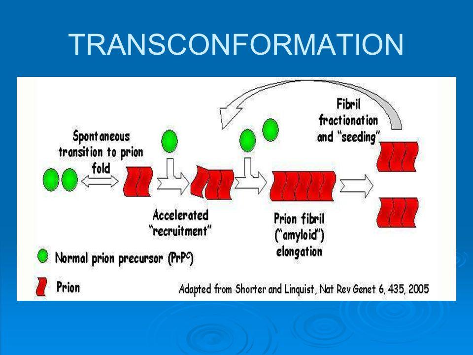 TRANSCONFORMATION