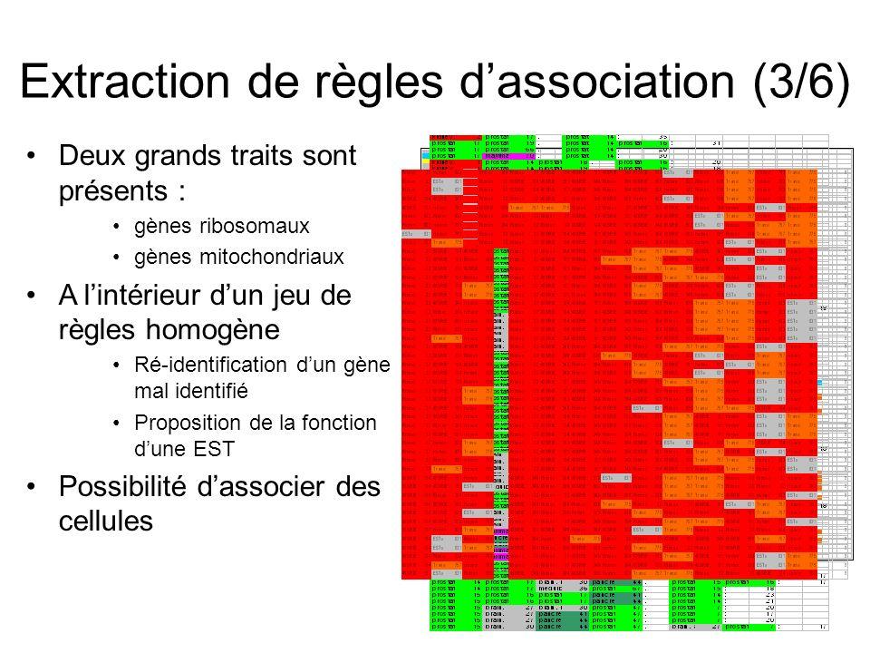 Deux grands traits sont présents : gènes ribosomaux gènes mitochondriaux A lintérieur dun jeu de règles homogène Ré-identification dun gène mal identifié Proposition de la fonction dune EST Possibilité dassocier des cellules Extraction de règles dassociation (3/6)