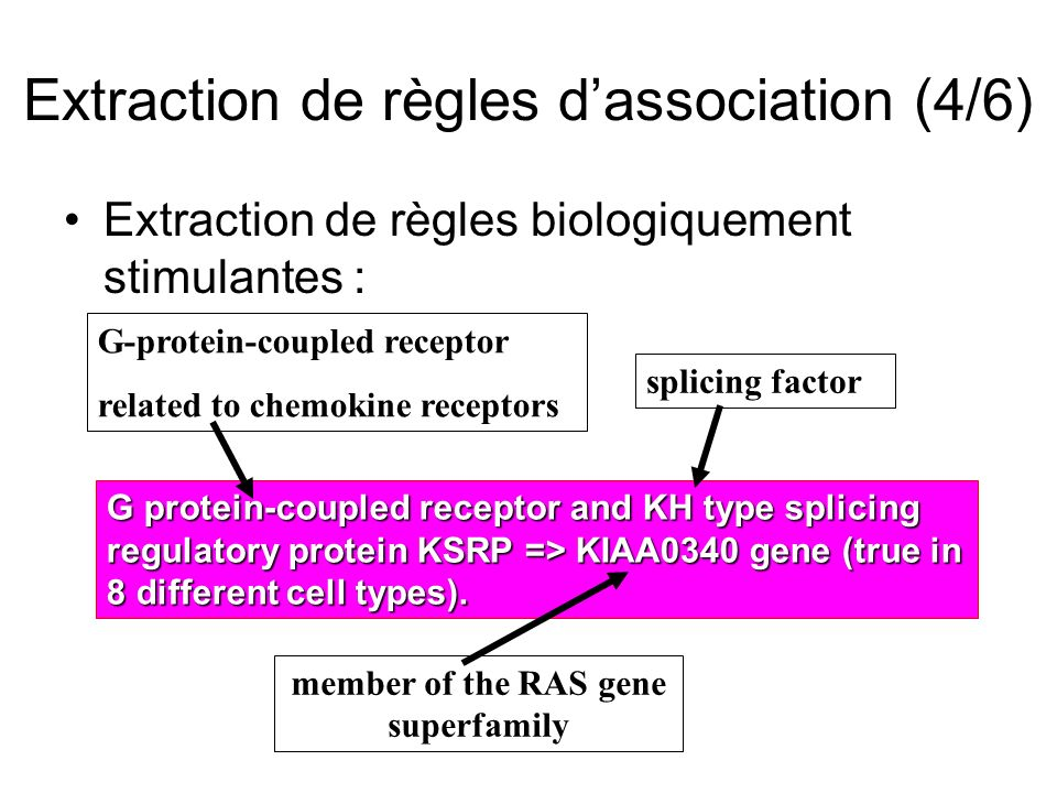Extraction de règles dassociation (4/6) Extraction de règles biologiquement stimulantes : G protein-coupled receptor and KH type splicing regulatory p