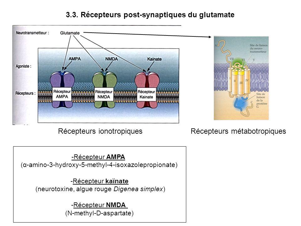 Récepteurs ionotropiquesRécepteurs métabotropiques 3.3. Récepteurs post-synaptiques du glutamate -Récepteur AMPA (α-amino-3-hydroxy-5-methyl-4-isoxazo