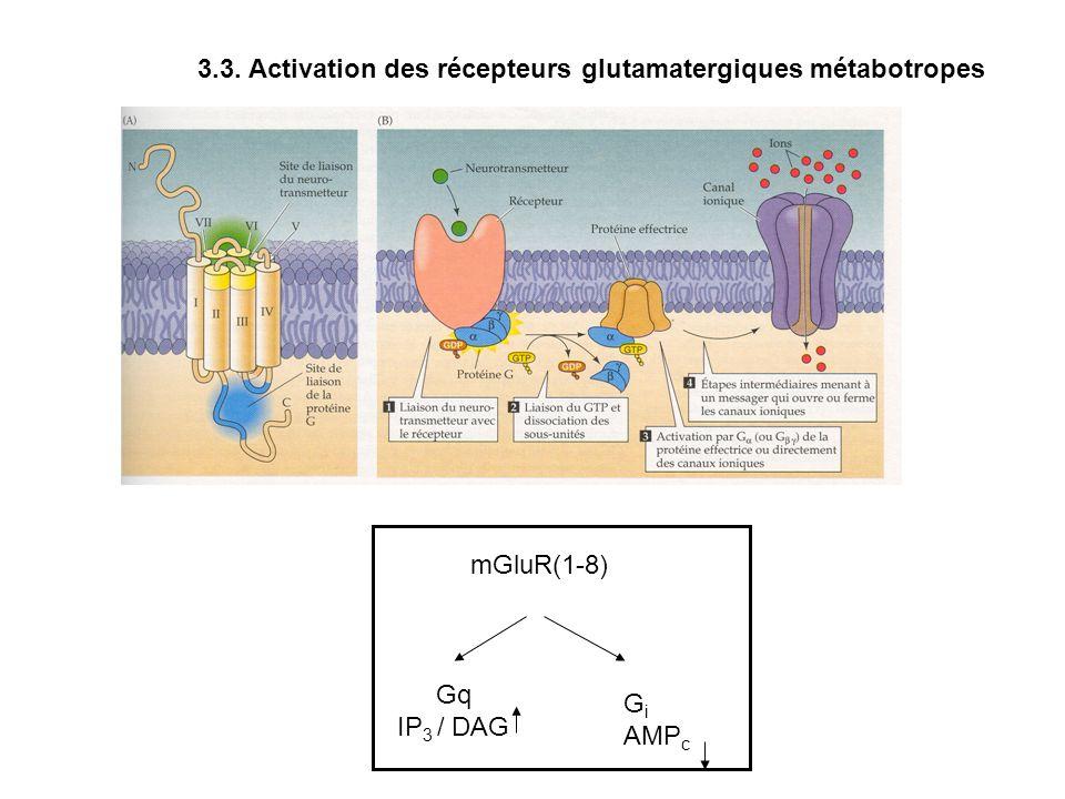 mGluR(1-8) Gq IP 3 / DAG G i AMP c 3.3. Activation des récepteurs glutamatergiques métabotropes