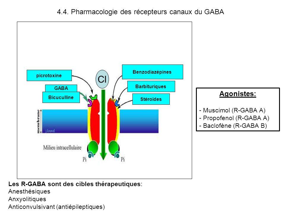 4.4. Pharmacologie des récepteurs canaux du GABA Les R-GABA sont des cibles thérapeutiques: Anesthésiques Anxyolitiques Anticonvulsivant (antiépilepti