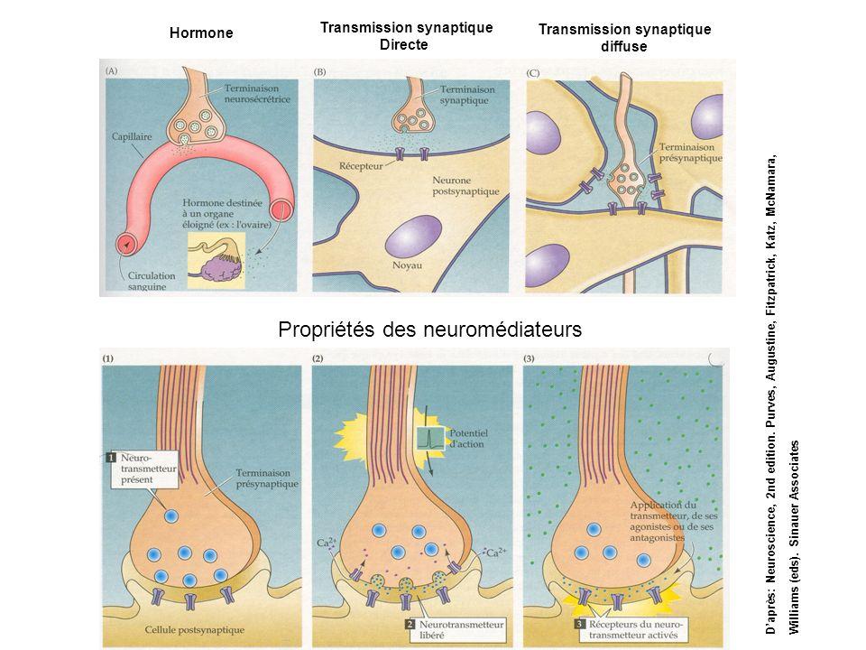 Hormone Transmission synaptique Directe Transmission synaptique diffuse Propriétés des neuromédiateurs Daprès: Neuroscience, 2nd edition. Purves, Augu