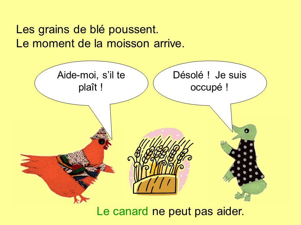 Les grains de blé poussent. Le moment de la moisson arrive. Aide-moi, sil te plaît ! Désolé ! Je suis occupé ! Le canard ne peut pas aider.