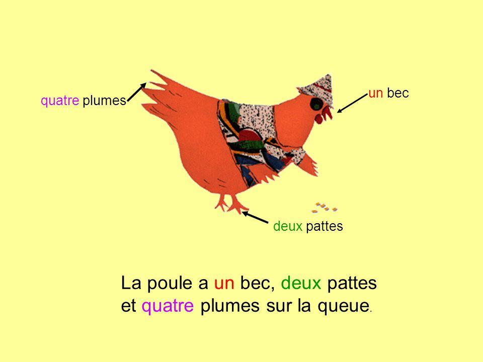 La poule a un bec, deux pattes et quatre plumes sur la queue. un bec deux pattes quatre plumes
