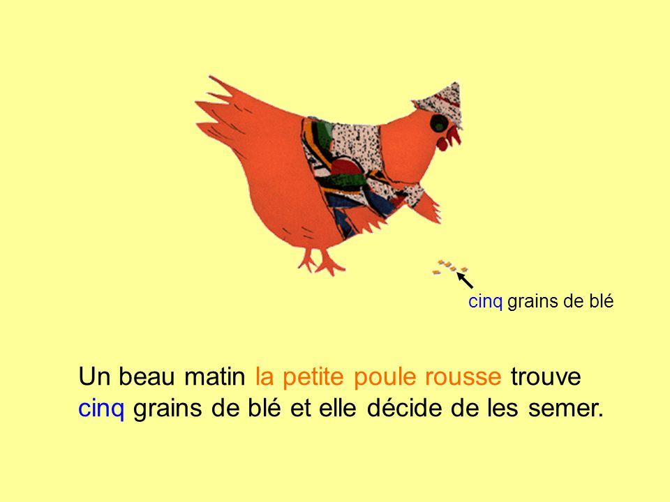 Un beau matin la petite poule rousse trouve cinq grains de blé et elle décide de les semer. cinq grains de blé