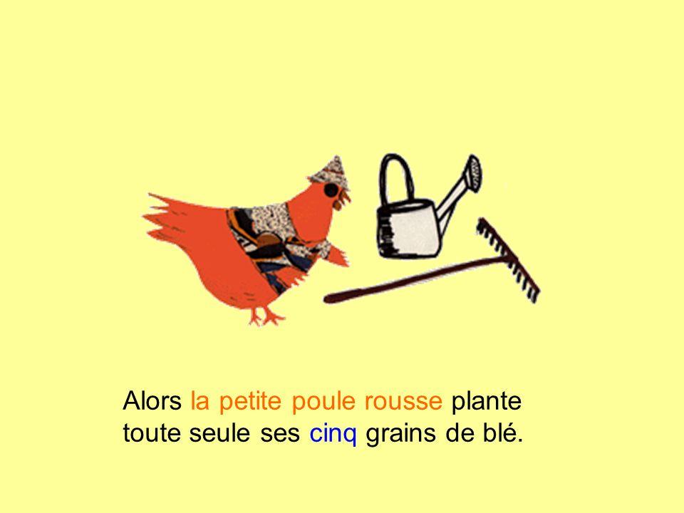 Alors la petite poule rousse plante toute seule ses cinq grains de blé.