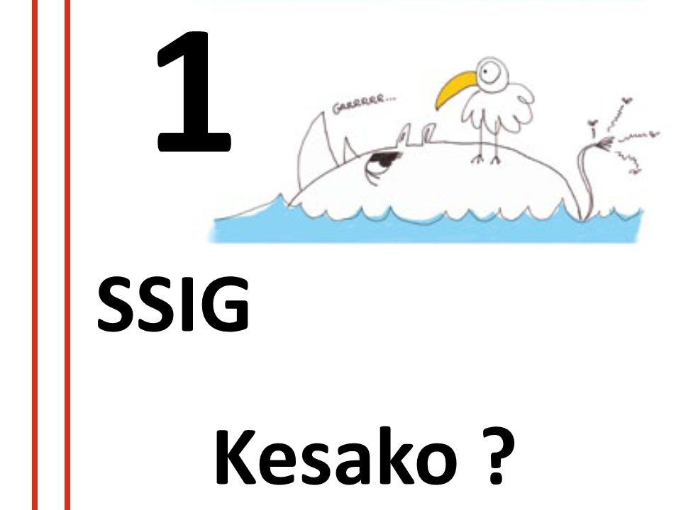 1 SSIG Kesako ?