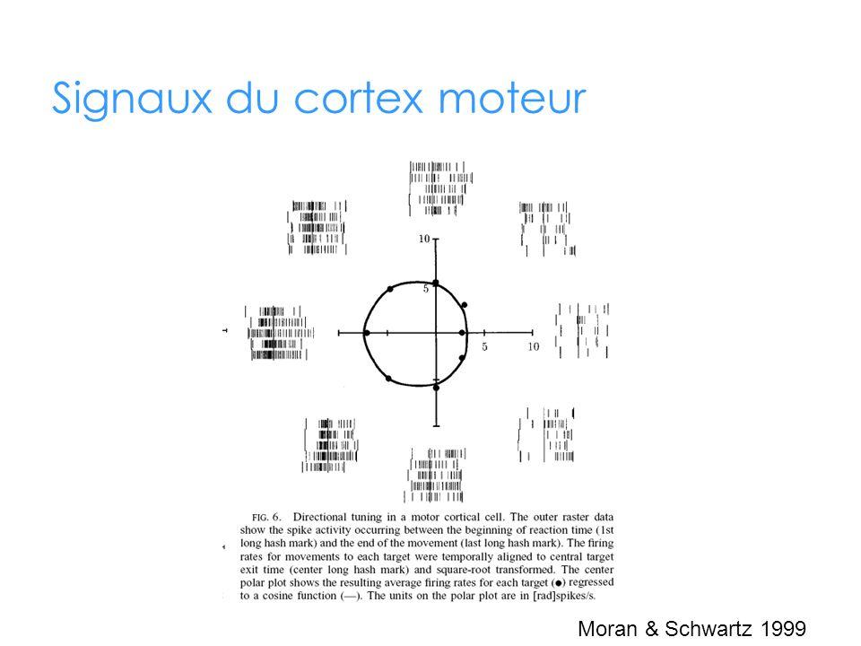 Signaux du cortex moteur Moran & Schwartz 1999