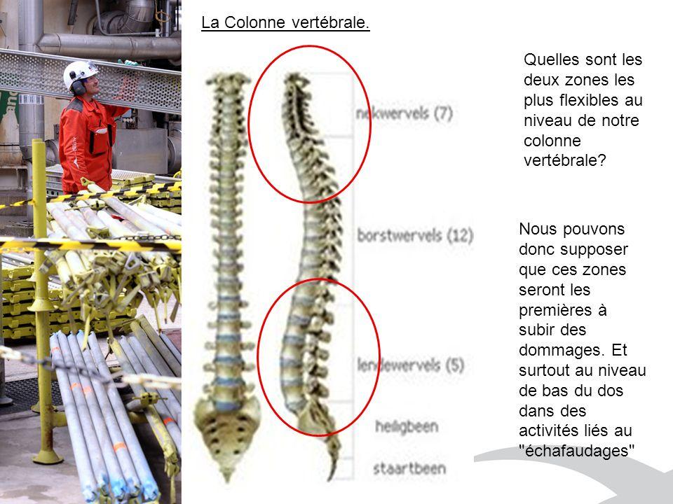 Quelles sont les deux zones les plus flexibles au niveau de notre colonne vertébrale.