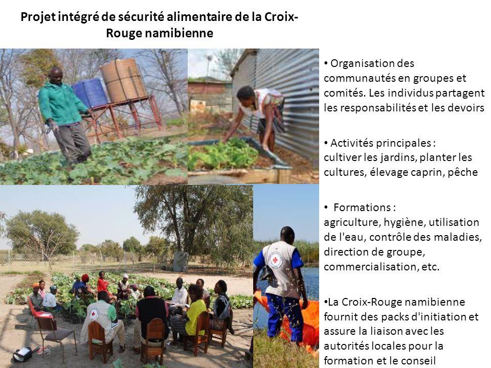 Projet intégré de sécurité alimentaire de la Croix- Rouge namibienne Organisation des communautés en groupes et comités.