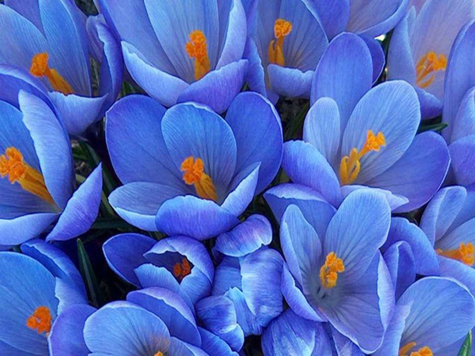 Prendre le temps de se laisser absorber dans un univers tout en bleu apporte une lumière purificatrice et exerce un effet bienfaisant sur la vue, louï
