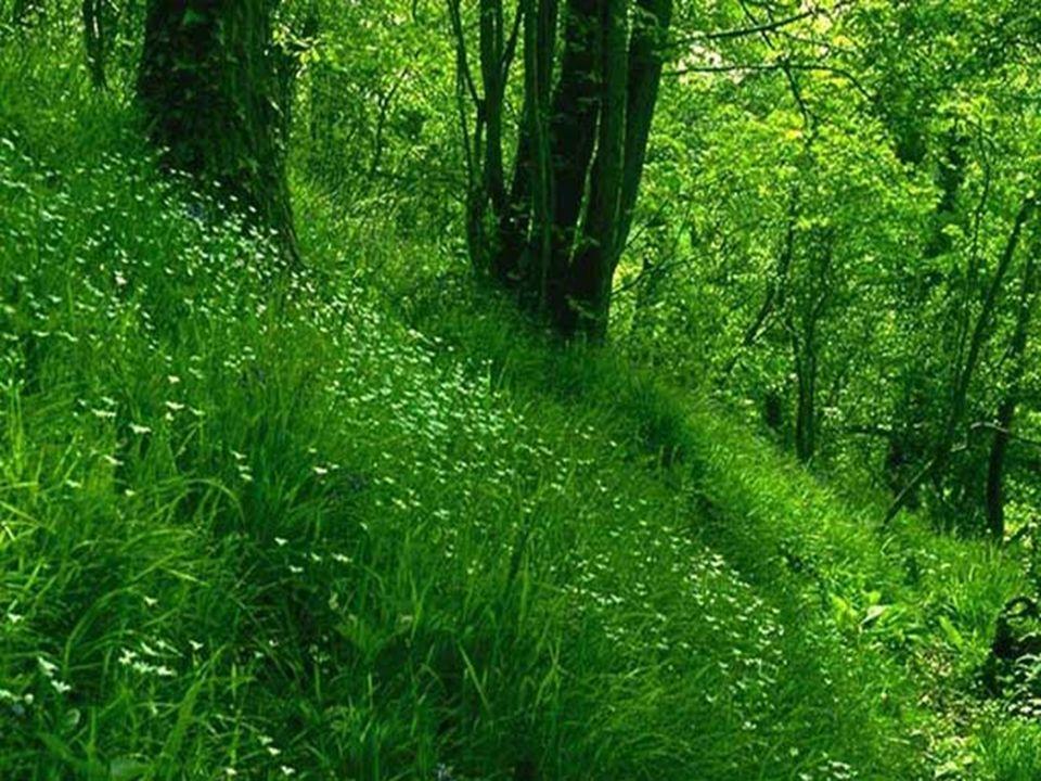 LeVERT vert cest le rayon de léquilibre. Cest un bon tonique pour les nerfs fatigués. La simple vue dun pré verdoyant, darbres et de plantes, peut avo