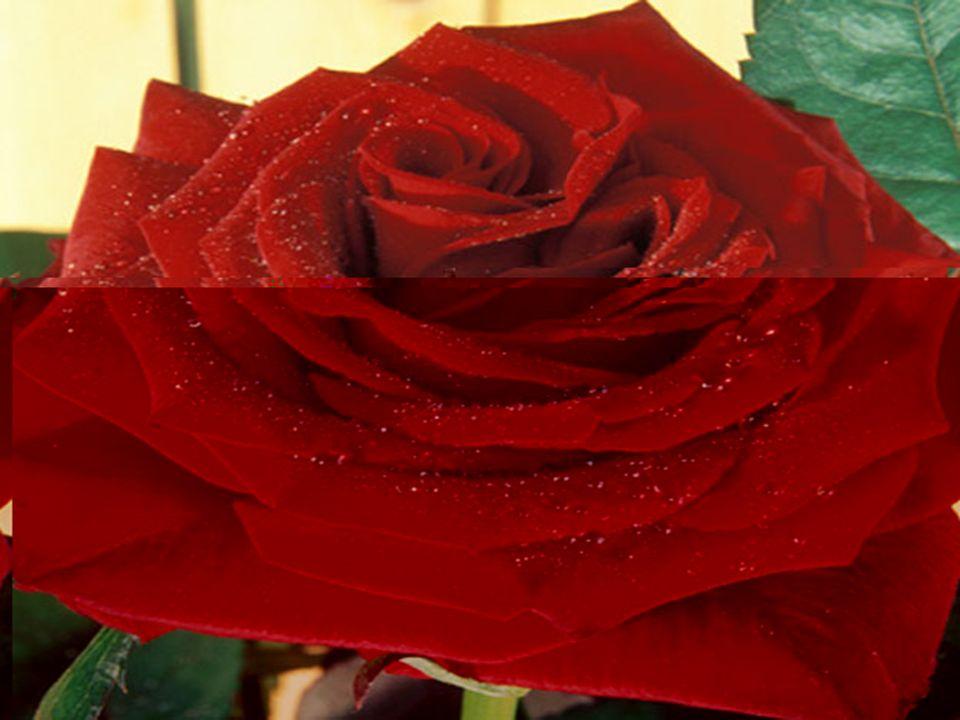 LeROUGE Le rouge est le rayon de la volonté, la puissance, la vie et lénergie. Le rouge est aussi un remède puissant des maladies du sang et de la dép