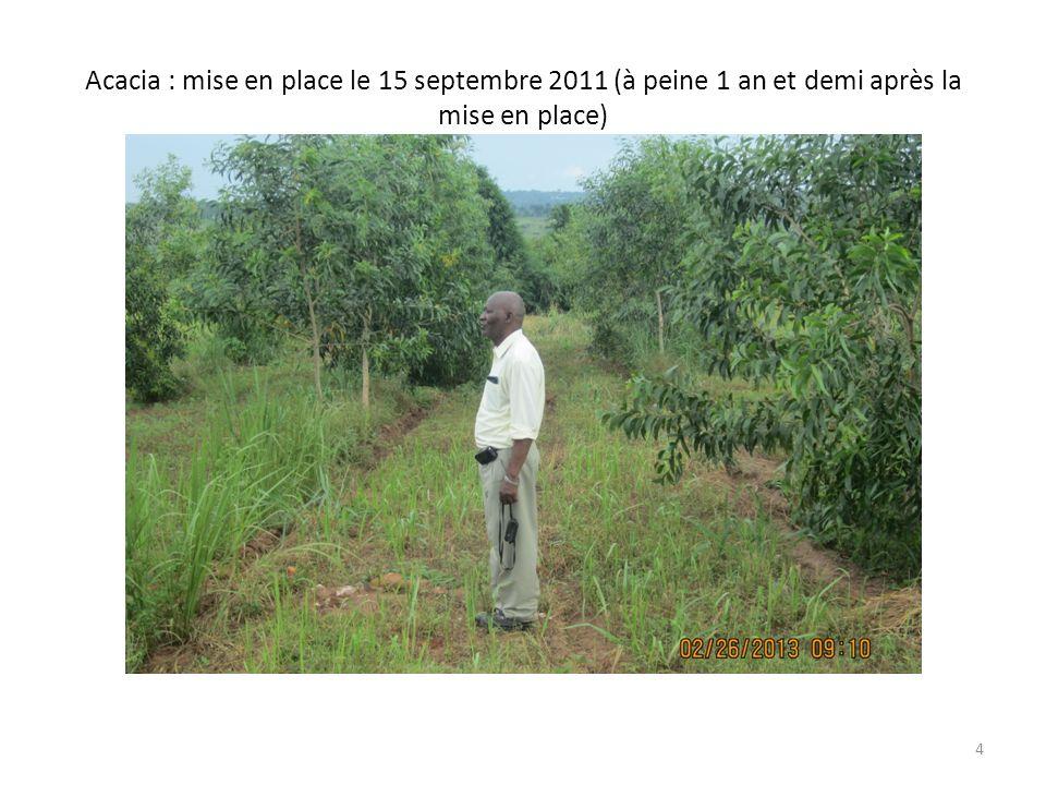 Ce bambou est là il y a des années, mais lacacia na à peine quun an et demi (croissance rapide 3