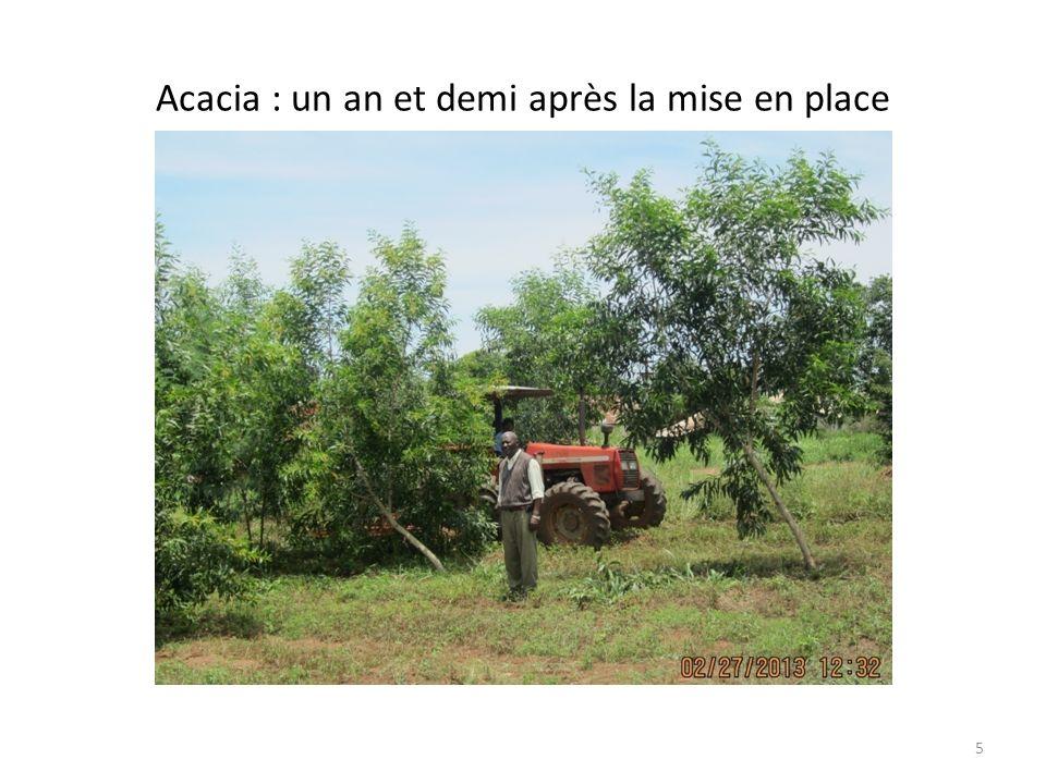 Acacia : mise en place le 15 septembre 2011 (à peine 1 an et demi après la mise en place) 4