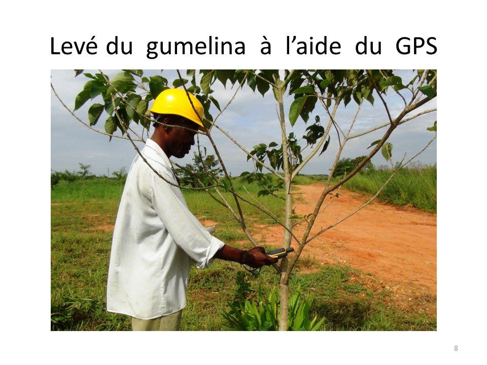 Levé du gumelina à laide du GPS 8